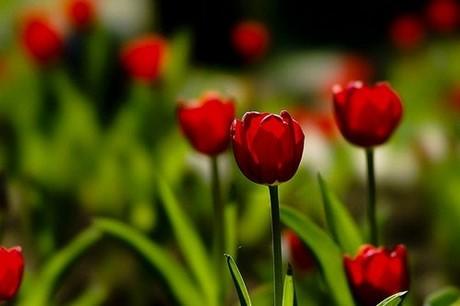 hinh dep hoa tuy lip