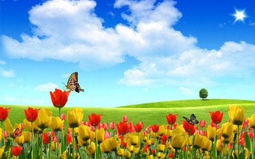 hinh nen dep ve hoa