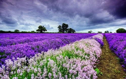 hinh nen dep vuon hoa
