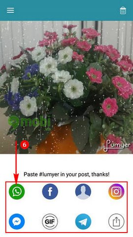 lumyer cho iPhone